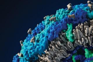 Zika virus lipid bi-layer (© 2007—2016 Visual Science Company)